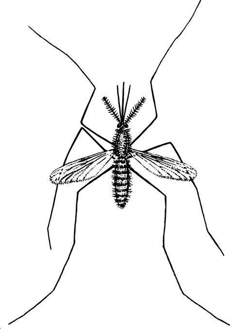OnlineLabels Clip Art - Mosquito