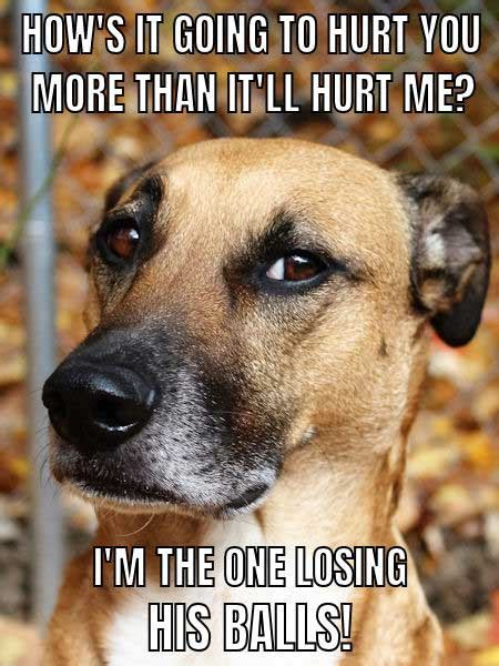 unforgettable funny dog memes unleashed barking laughs