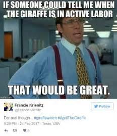 April Meme - livestream of pregnant giraffe is driving the web cazy