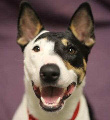 wisconsin humane society available dogs wisconsin humane society cuts adoption fees in half through may 29 tmj4