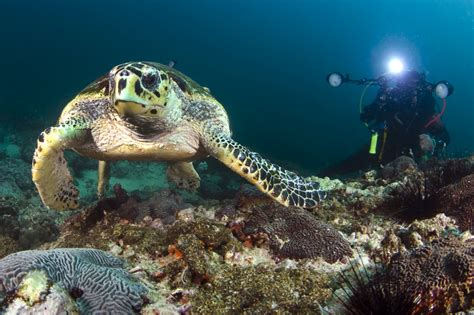 dive oman your guide to diving oman dive reviews reports