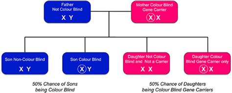 color blindness genetics inherited colour vision deficiency colour blind awareness