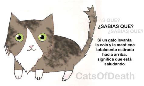 imagenes de sabias que gatito sabias que cola levantada by catsofdeath on