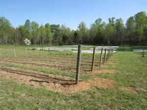 Raspberry Trellis Raspberry Trellis Sandyfoot Farm