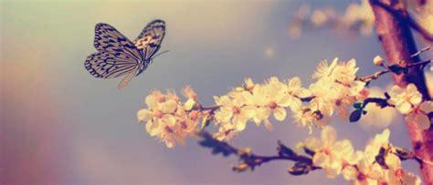 giardino farfalle come realizzare un giardino per le farfalle febo garden