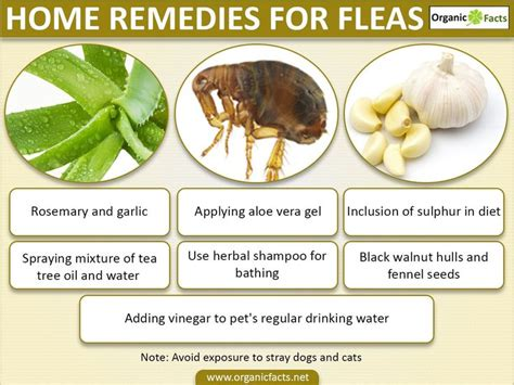 25 best ideas about home remedies fleas on