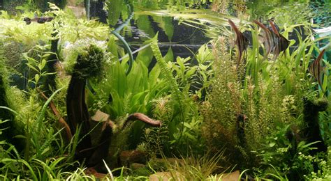 Aquarium Plants 3 3 requirements for healthy aquarium plants