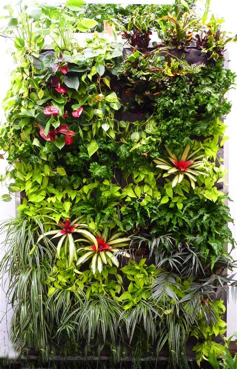 Vertical Garden Plants Plants On Walls Vertical Garden Systems July 2010