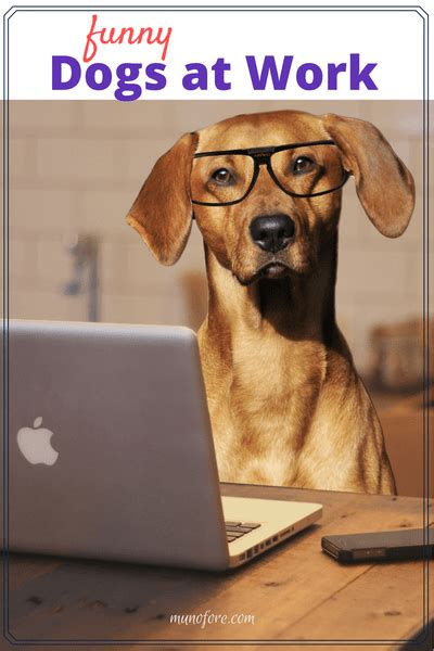dogs at work dogs at work memes fridayfrivolity munofore
