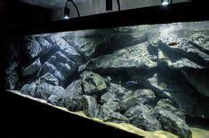 nice rio xingu scape big aquarium aquarium design