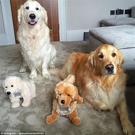 alexis sanchez dogs instagram alexis sanchez sets up an instagram page for his dogs