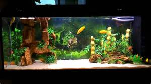 beautiful home fish tanks beautiful fishes for home aquarium