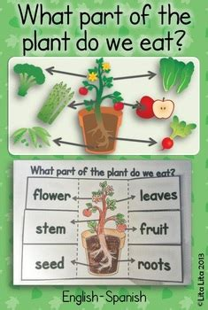 the first grade parade the plants dance what part of the plant do we eat fold learn by lita