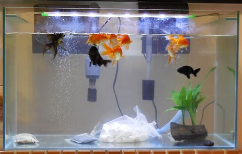fish tank in bedroom feng shui fish tank in bedroom feng shui 28 images using a feng