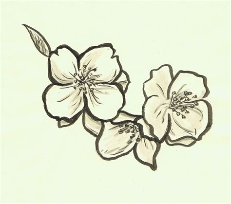 jasmine flower tattoo 1000 ideas about flower tattoos on