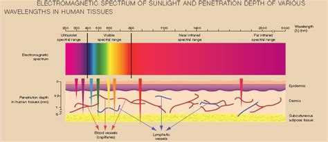 what does polarized light how does polarized light stimulate the function of the