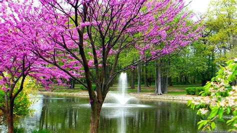 beautiful pictures of spring beautiful spring wallpaper 183