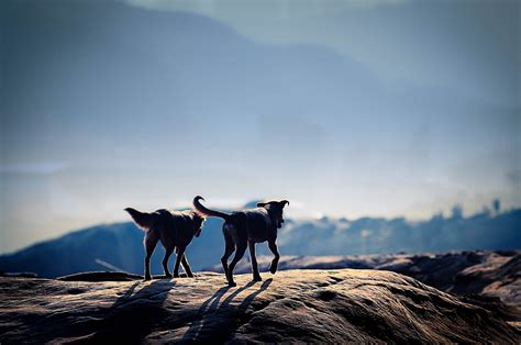 are dogs allowed in national parks adventure journal poll should dogs be allowed in national parks backcountry