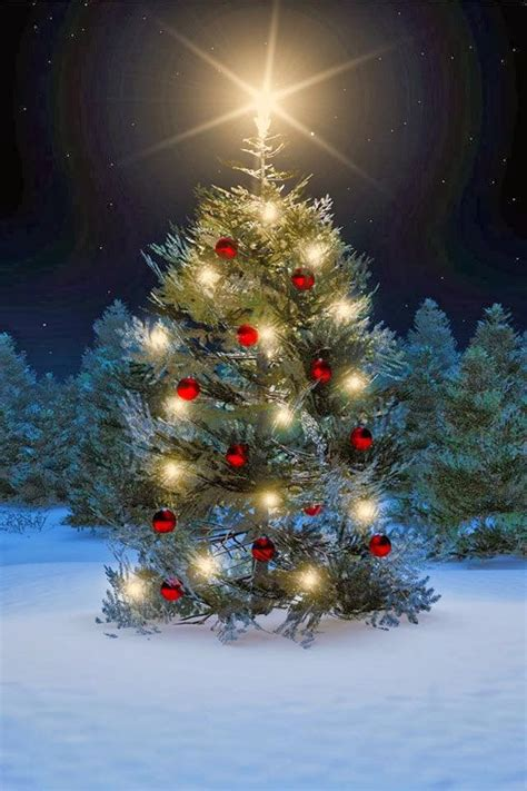 beautiful christmas tree christmas pinterest