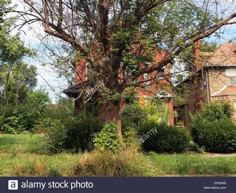 buying a house in detroit michigan boarded up house covered by a tree in detroit michigan usa stock photo royalty free