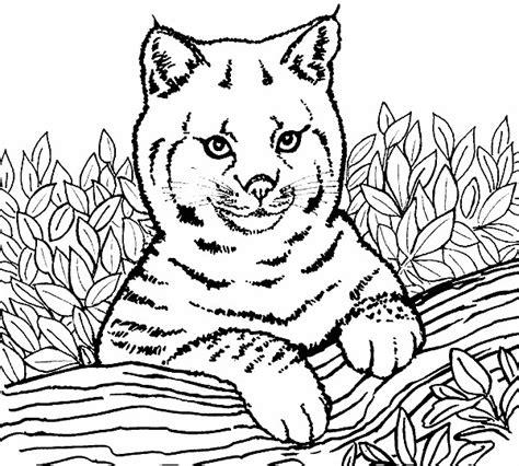 coloring pages lion 4163 lion coloring pages coloringpages1001 com