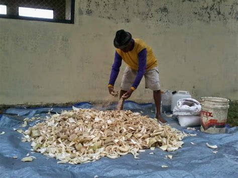 Fermentasi Pakan Ternak Kambing pakan fermentasi untuk ternak kambing daging kambing