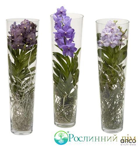 Vanda Vase by Vanda Orchid In Vase