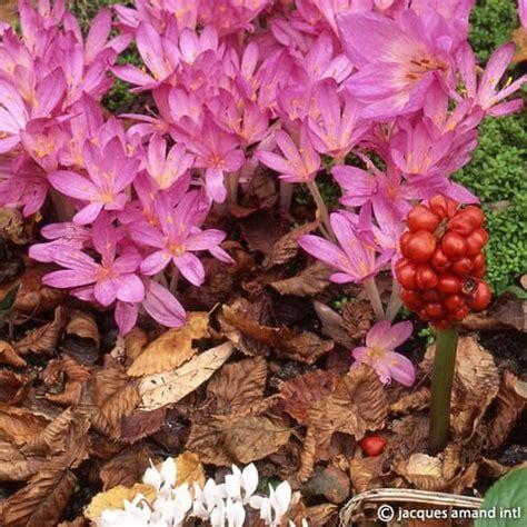 Autumn Intl autumn herald jacques amand intl