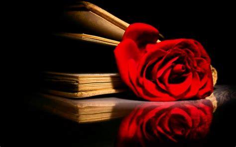 imagenes de rosas sobre libros rosa y libros im 225 genes y fotos