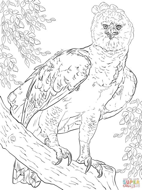 Harpy Eagle Coloring Page 301 moved permanently