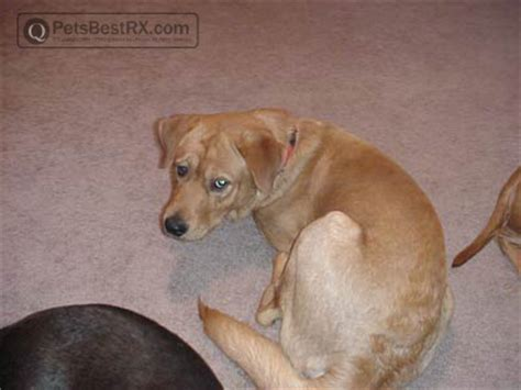 puppy mange treatment breeds husky medium size breeds picture