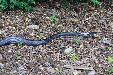 Garden Snakes Eat Weekend Science Garter Snakes Growing With Science