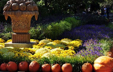 fall flowers for garden pumkins and flowers in a fall garden decoist