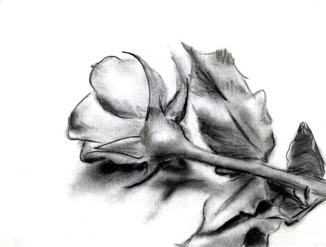 pencil drawings charcoal drawings and art galleries rose charcoal rose by sanglantreve on deviantart