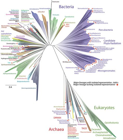 Tree Of Life by Wordlesstech Scientists Reveal New Tree Of Life