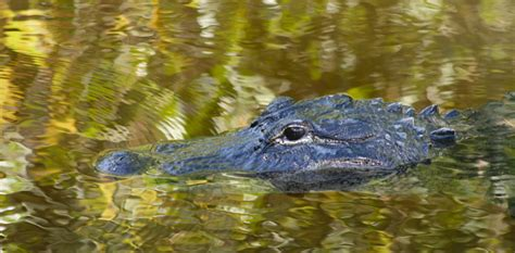 everglades airboat tours cheap everglades national park atractions in miami miami
