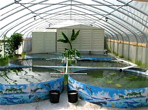 farm raised fish when you can set up your own fish farming