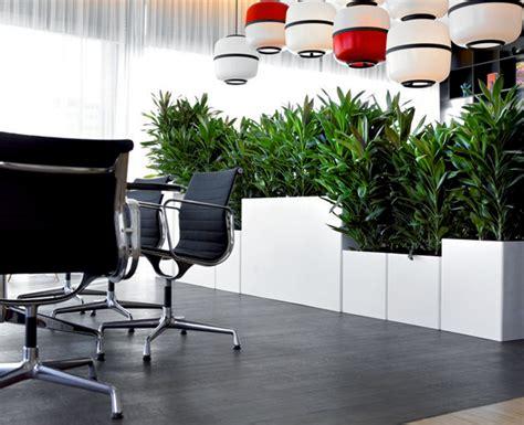 piante da arredo interno arredamento per ufficio verde da interno