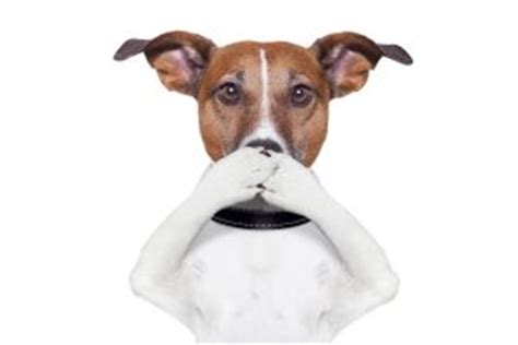 puppy teething bad breath the ultimate pet odor removal tips for all pet owners