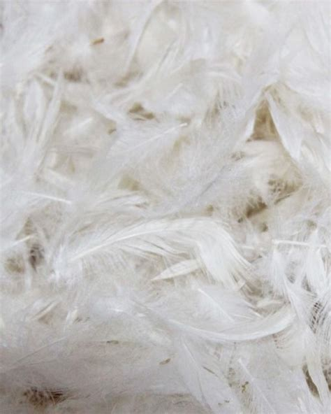 feather stuffing for sofa cushions feather stuffing for sofa cushions www energywarden net