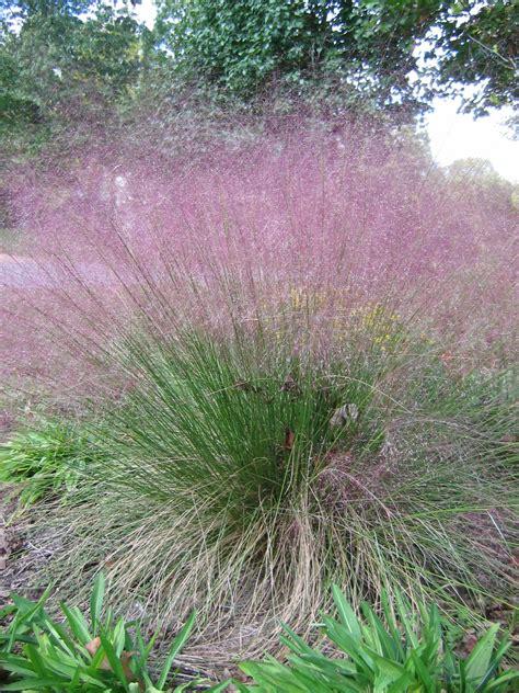 top ornamental grass