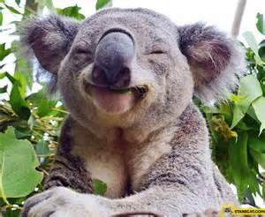 Costa Coffee Interior Happy Koala Bear Starecat Com