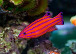 10 of the Most Expensive Tropical Fish   TheRichest
