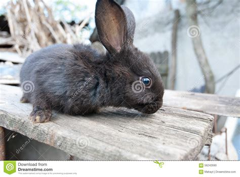 City Bunny Country Bunny by European Bunny Rabbit On Country Side Stock