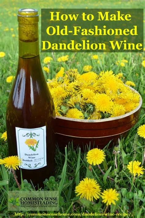 dandelion wine recipe and the mistake you don t want to make