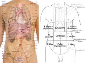 Pool House Junkies lungs surface anatomy