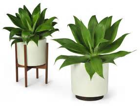 Indoor Planters Modernica Case Study Planter W Plinth White Modern