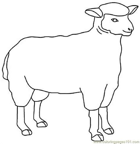 sheep outline coloring page coloring home