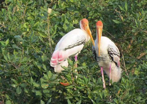 soar high at these 10 bird sanctuaries in india lbb delhi