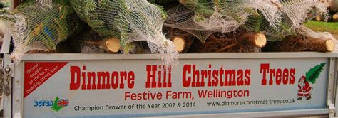 dinmore hill christmas trees festive farm weekends